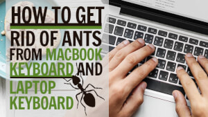 How To Get Rid of Ants From Mac Book Keyboard and Laptop Keyboard