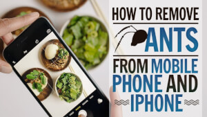 How to Remove Ants from Mobile Phone and iPhone