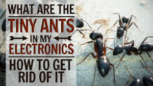 Why are Ants Attracted to Electronics - Pests Control