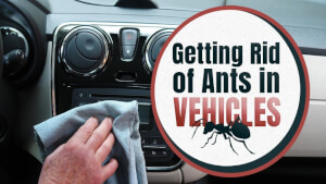 Getting Rid of Ants in Vehicles