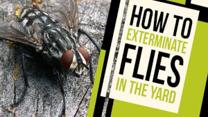 How to Exterminate Flies in the Yard