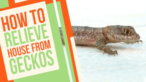 How to Relieve the House from Geckos