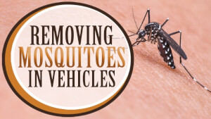 Removing Mosquitoes in Vehicles