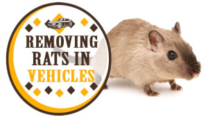 Removing Rats in Vehicles