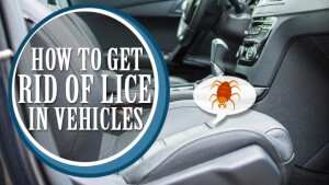 How to Get Rid of Lice in Vehicles