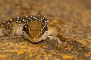 Plants Repel Geckos