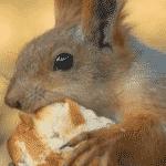 Squirrel Bite