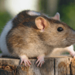 Top House Pests