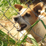 Wild Stray Rabid Dogs Bite