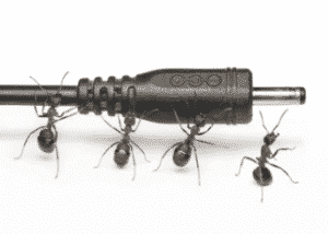 Ants Electric Get Rid Complete Guide