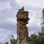 Bird in Roof and Chimney